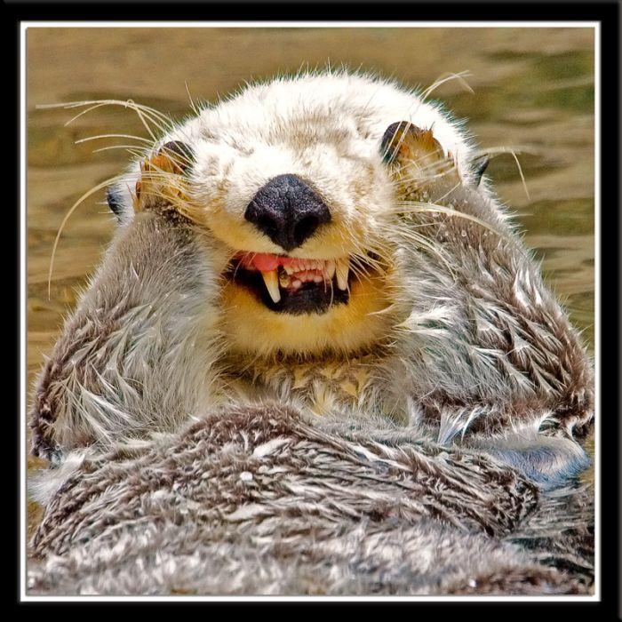 Cute animal makes faces (4 pics)