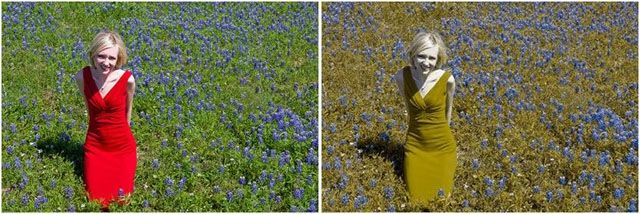 Are you colorblind? (12 pics)