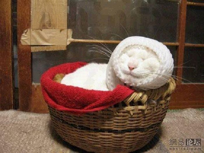 Sleeping Cat (20 pics)