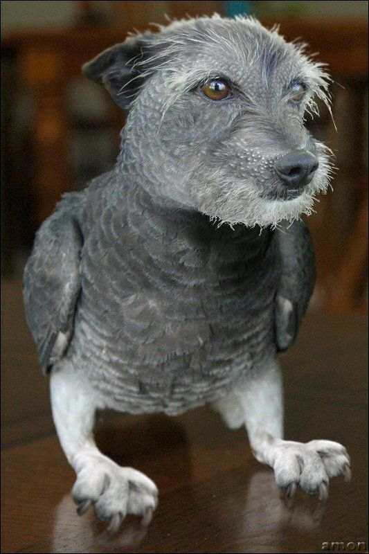 Animals that never existed (48 pics)