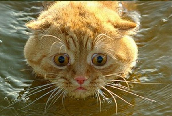 Scared Cat (4 pics)