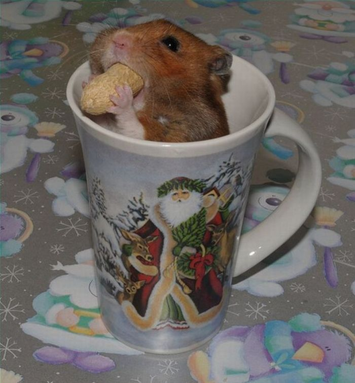 Hamster eats some snack (8 pics)