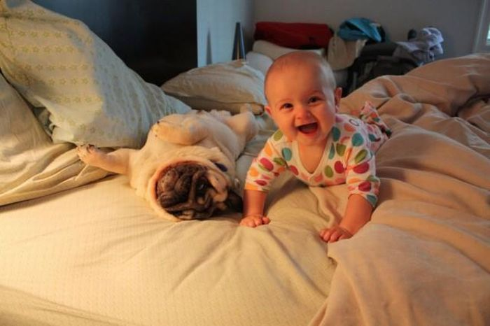 Baby and two pugs (4 pics)