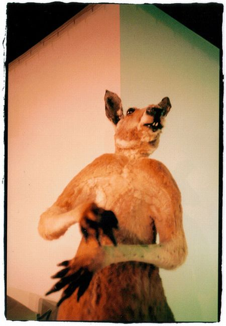 Crappy Taxidermy (60 pics)