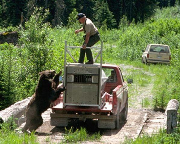 Bear wants revenge (9 pics)