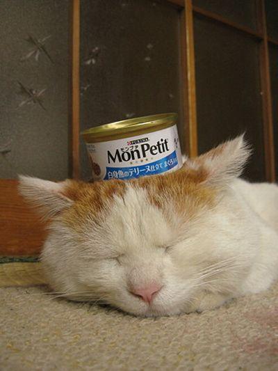 Sleeping Cat. Part 2 (4 pics)