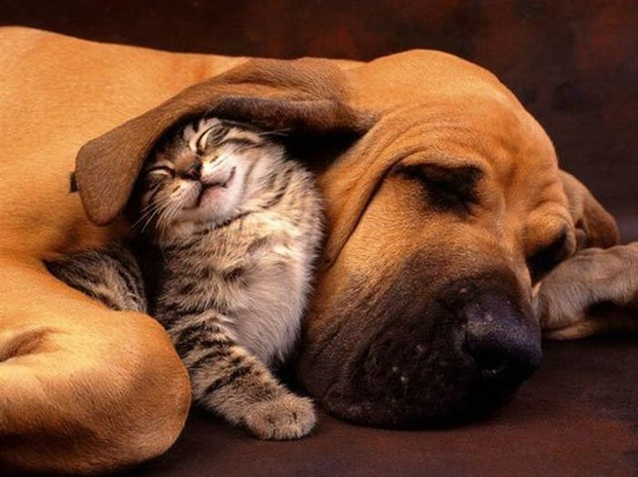 Like Cat and Dog (55 pics)