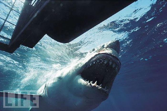 Inside a shark
