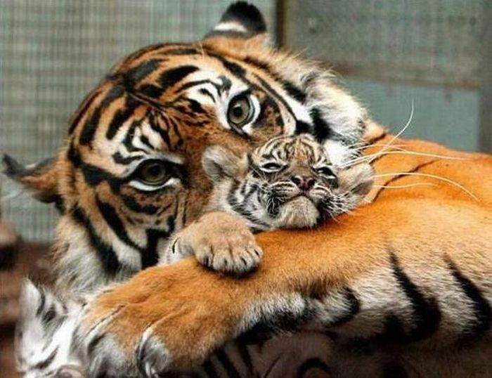 Humans or Animals. Who are better parents? (38 pics)