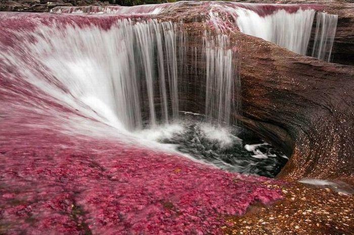 Caño Cristales river in Columbia  (21 pics)