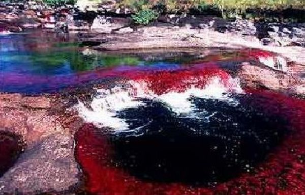 تصاویری دیدنی از رود 5 رنگ در كلمبیا www.talab.ir
