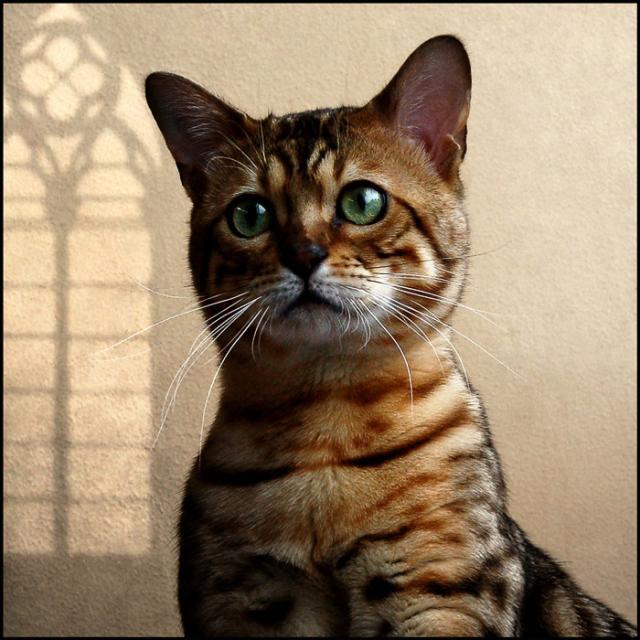 Cats (27 pics)