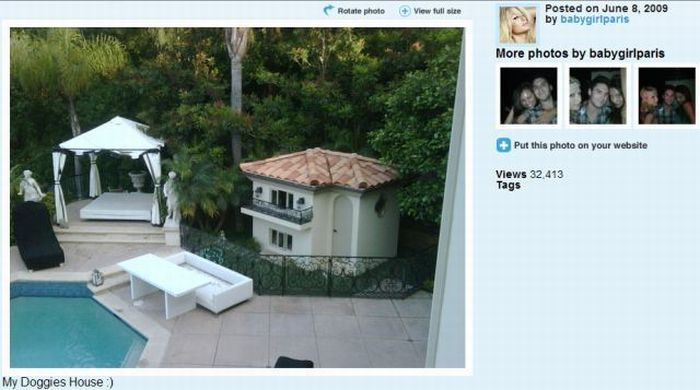 Paris Hilton's dogs have a new home (12 pics)