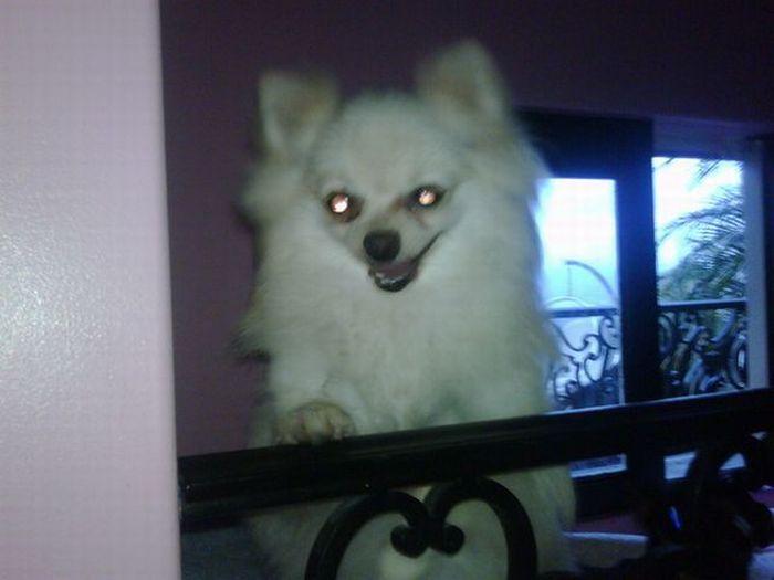Paris Hilton's dogs have a new home (12 pics)