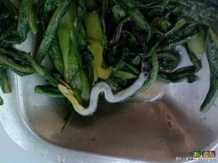 A snake surprise in salad (4 pics)