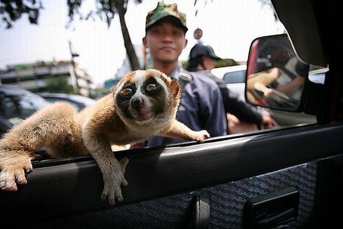 Animals on the run (28 pics)