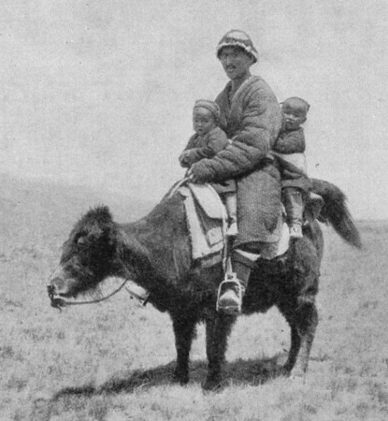 Riding the animals other than horses  (20 pics)