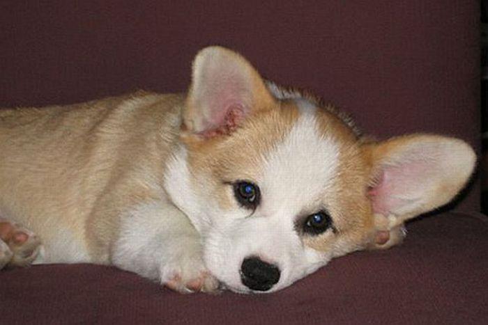 Cute Puppy (12 pics)