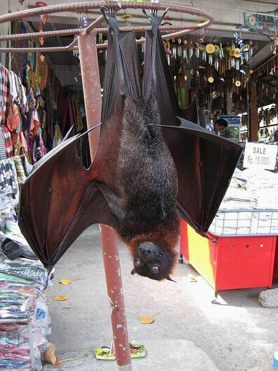 Flying Fox (7 pics + video)