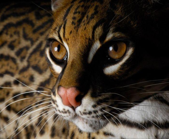 New Animal Photos (20 pics)