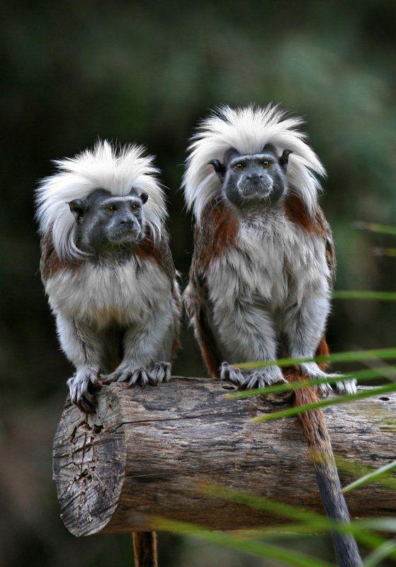 Fotos de animales que probablemente no han visto antes.