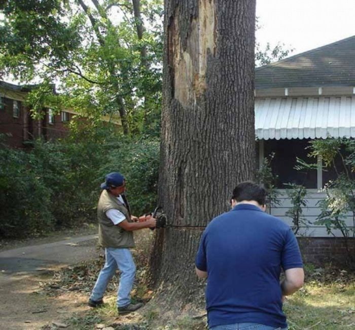 How not to saw a tree down (5 pics)