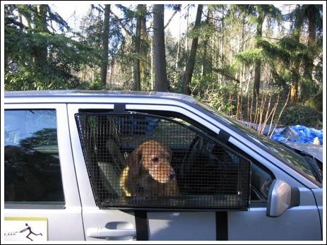 Your dog is safe now (10 pics)