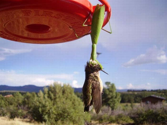 Bird-eating insects (11 pics)