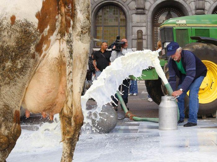 Milk strike in Belgium (6 pics)