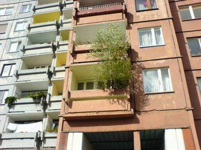 Trees can grow anywhere (38 pics)