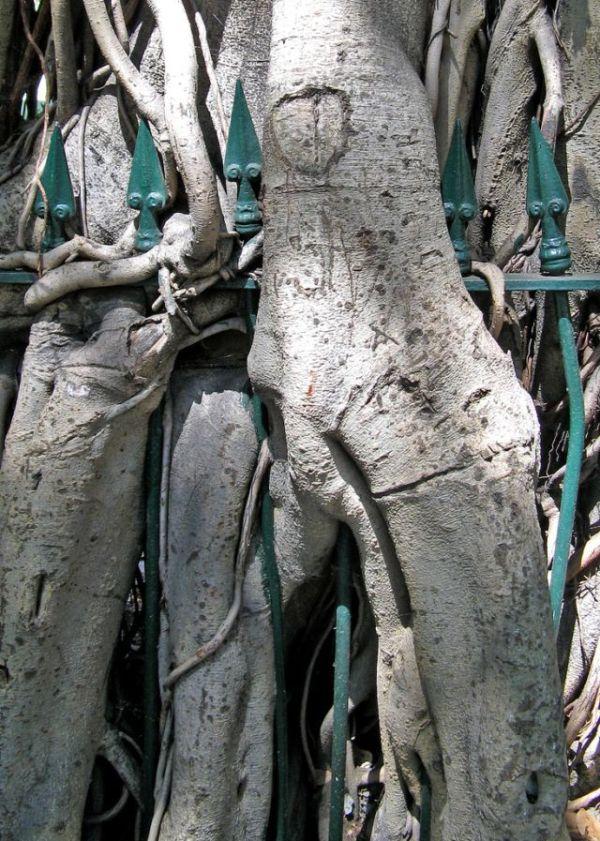Trees can grow anywhere (38 pics)