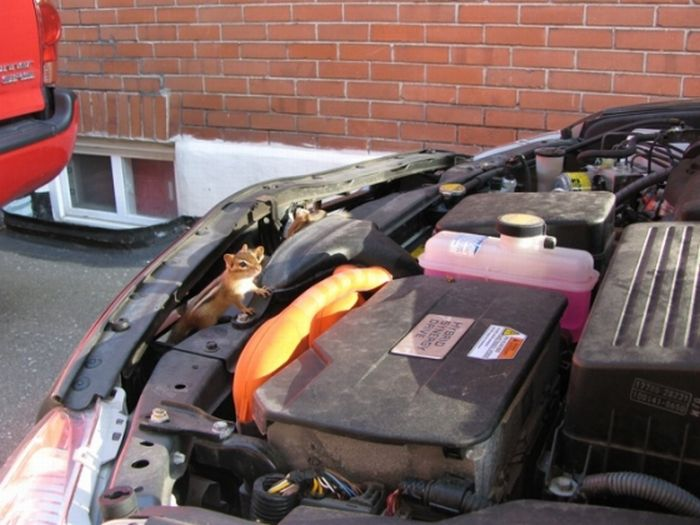 Animals under the hood (3 pics)