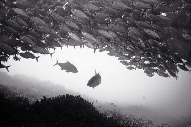 Black And White Underwater Photography By Wayne Levin (36 pics)