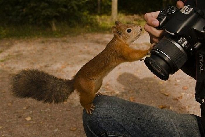 Animal Photographers (36 pics)