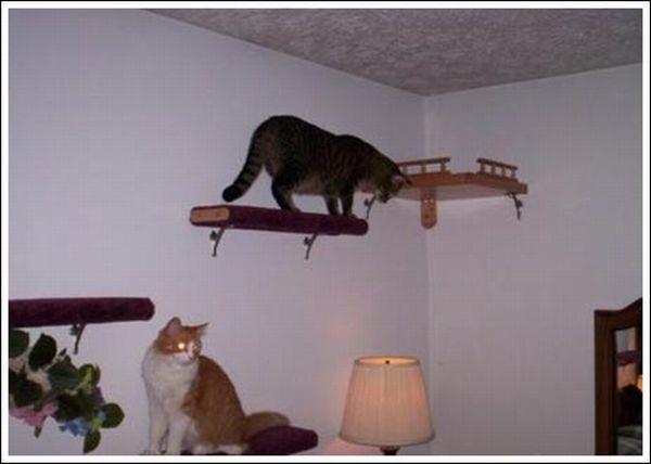 Cat's Walkway (36 pics)