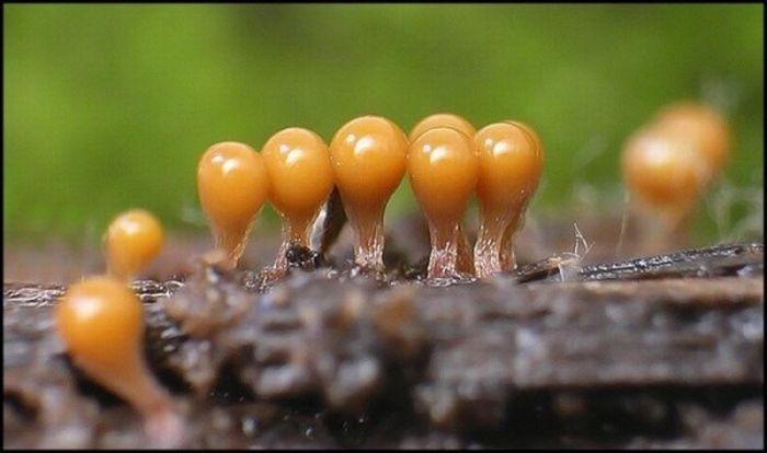 Small Plants (30 pics)