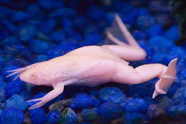 The cutest albino animals (15 pics)