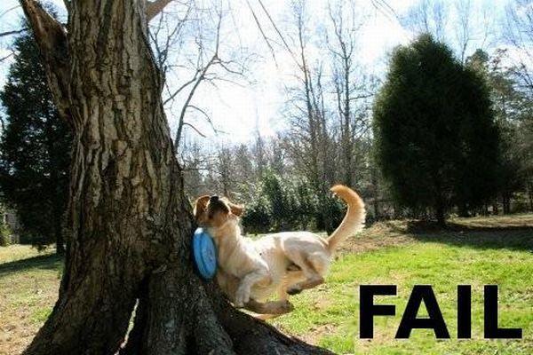 25 best FAIL pics (25 pics)