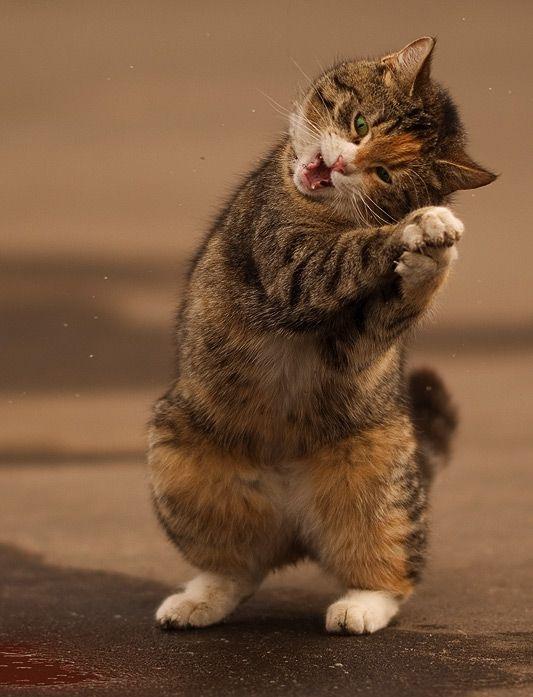 Funny Cat (8 photo)