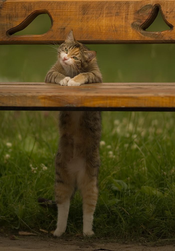 Funny Cat (8 photo)