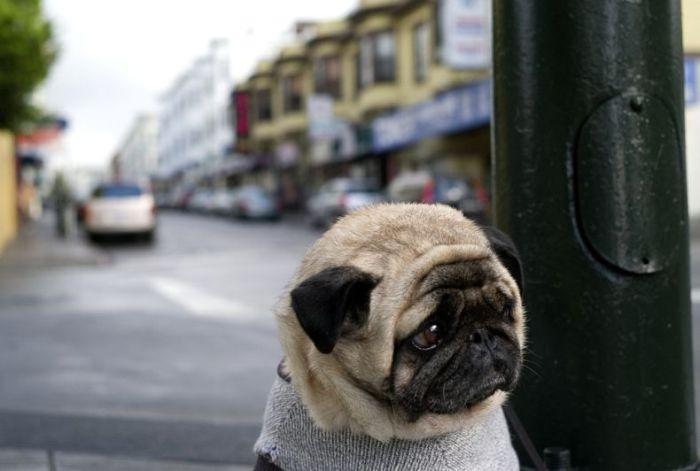 The Saddest Dog Ever (4 pics)