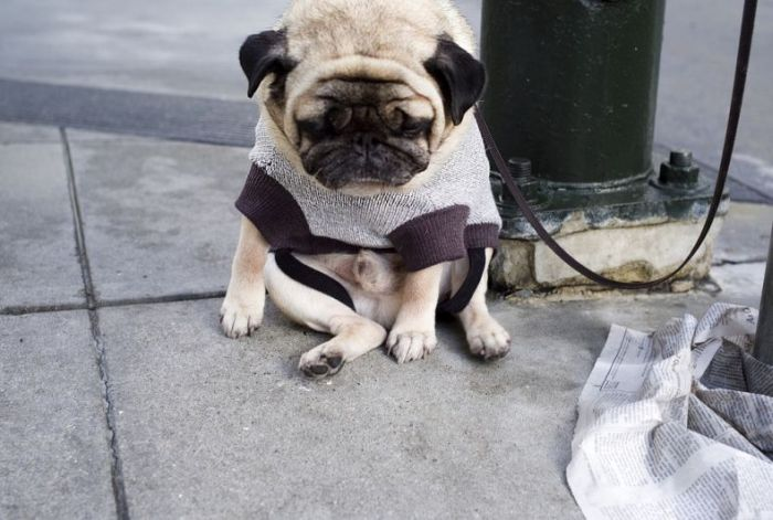 The Saddest Dog Ever (4 pics)