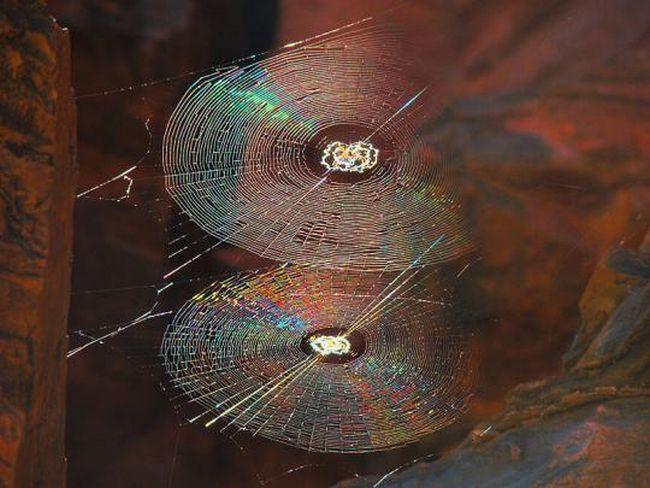 Svijet paukova Spider_webs_04