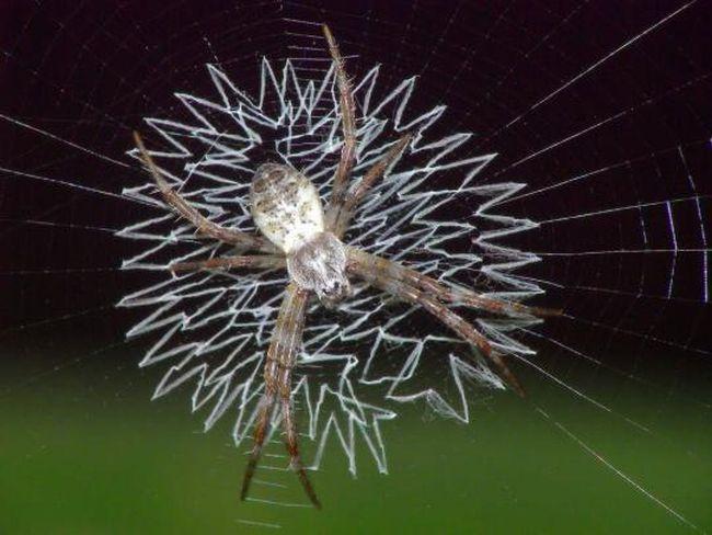 Svijet paukova Spider_webs_06