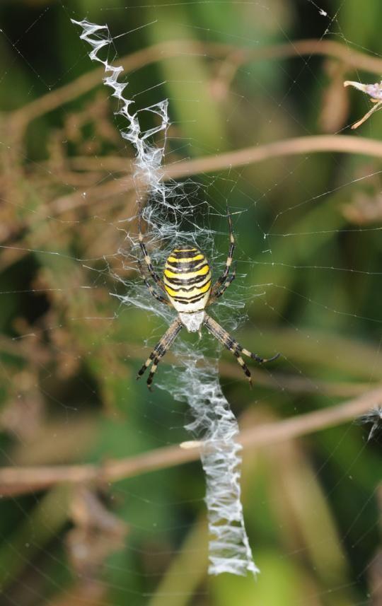 Svijet paukova Spider_webs_10