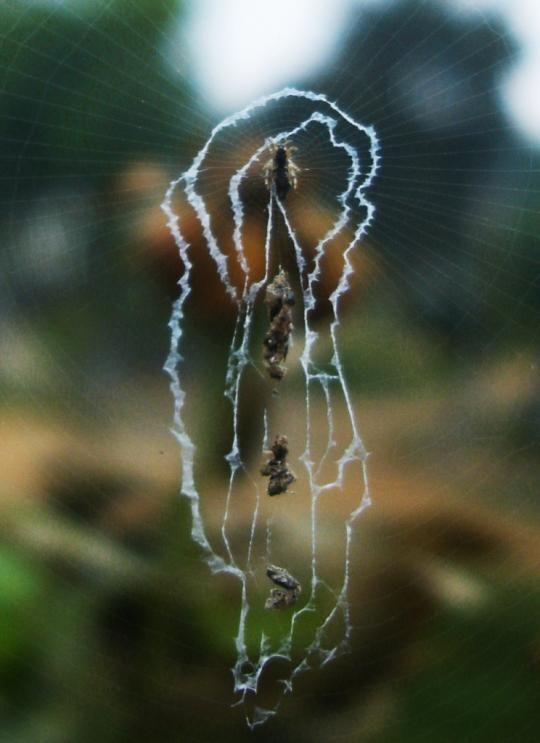 Svijet paukova Spider_webs_12