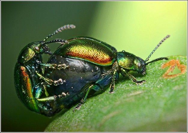 Amazing Insect Images By Igor Iwanowicz (60 pics)