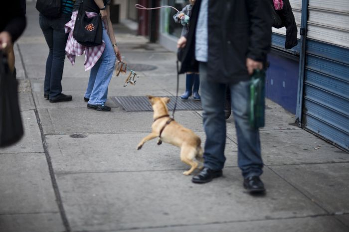 Invisible Dogs mission (27 pics)