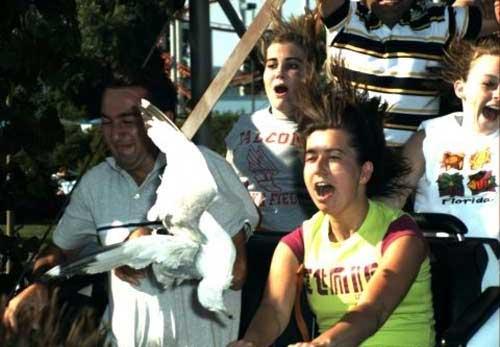 Roller Coaster Fun (20 pics)