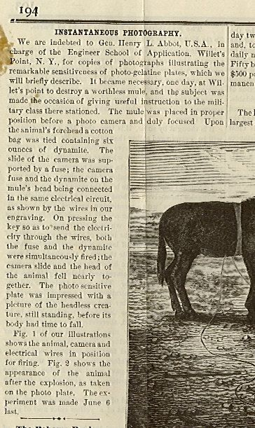 Cruel Mule Experiment (5 pics)